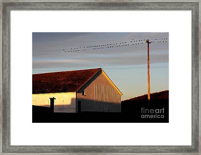 Birds On A Wire Framed Print by Wingsdomain Art and Photography