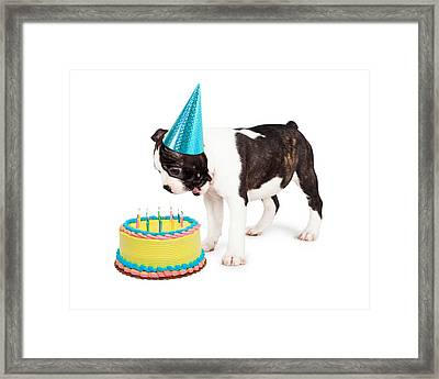 Birthday Dog Blowing Out Candles Framed Print by Susan  Schmitz