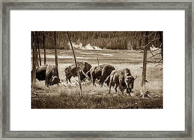 Bison Of The Yellowstone Framed Print by TL Mair