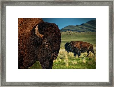 Bison On The Plain Framed Print by Paul W Sharpe Aka Wizard of Wonders