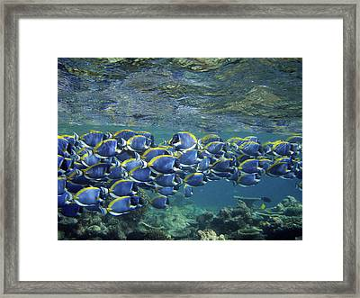 Biyadoo, South Male Atoll, Maldives Framed Print by Federica Grassi