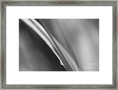 Black And White Abstract - Sole Waterdrop In Grass - Natalie Kin Framed Print by Natalie Kinnear