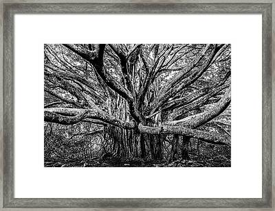 Black And White Banyan Framed Print by Kelley King