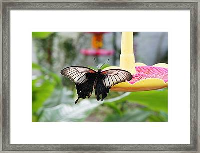Black And White Butterfly Framed Print by Art Spectrum