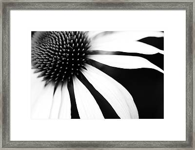 Black And White Flower Maco Framed Print by Copyright Johan Klovsjö
