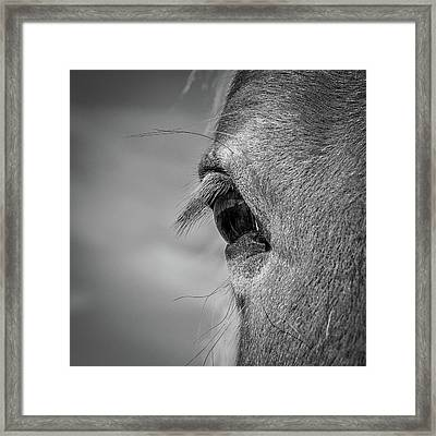 Black And White Horse Eye Framed Print by Paul Freidlund