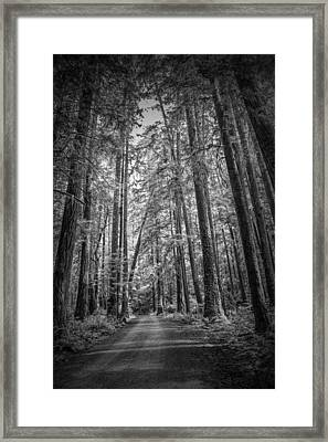 Black And White Of A Road In A Vancouver Island Rain Forest Framed Print by Randall Nyhof