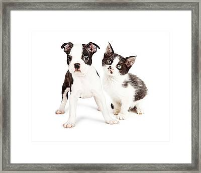 Black And White Puppy And Kitten Together Framed Print by Susan Schmitz