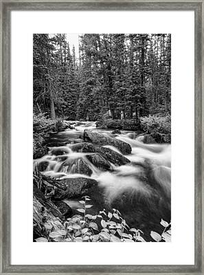 Black And White Roosevelt National Forest Stream Portrait Framed Print by James BO  Insogna
