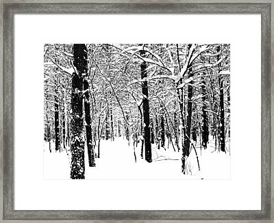 Black And White Winter Forest Framed Print by Debbie Oppermann
