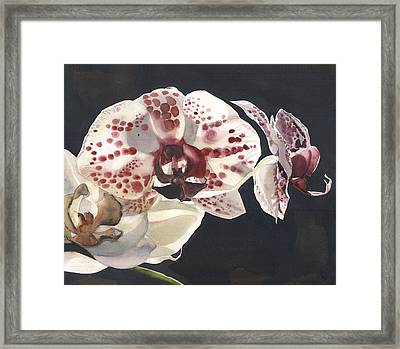Black And White With Red Framed Print by Alfred Ng