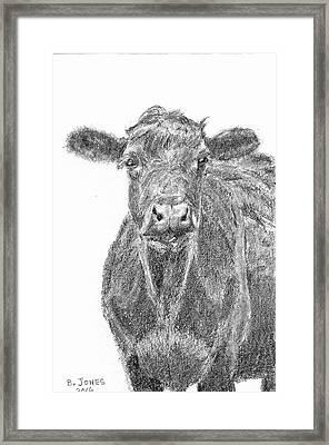 Black Angus Framed Print by Barry Jones