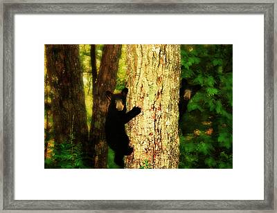 Black Bear Cubs Framed Print by Gray  Artus