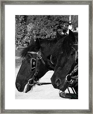 Black Beauties Framed Print by Stuart Turnbull