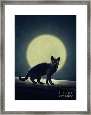 Black Cat And Full Moon Framed Print by Jelena Jovanovic