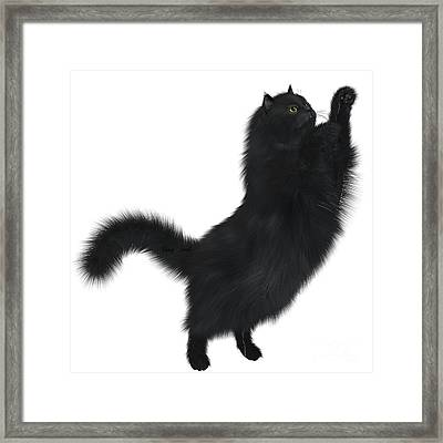Black Cat Framed Print by Corey Ford