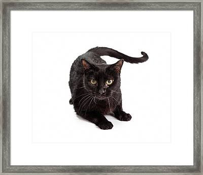 Black Cat Laying Looking At Camera Framed Print by Susan  Schmitz