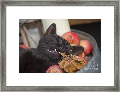 Black Cat On Old Barrel Framed Print by Ornella Bonomini