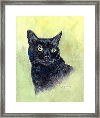 Black Cat Portrait Framed Print by Phyllis Tarlow