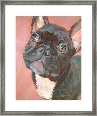 Black Dog, Looking Cute Framed Print by Robie Benve