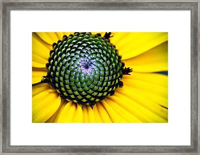 Black Eyed Susan Goldsturm Flower Framed Print by Ryan Kelly