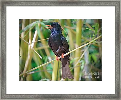 Black Is Beautiful Framed Print by Judy Kay
