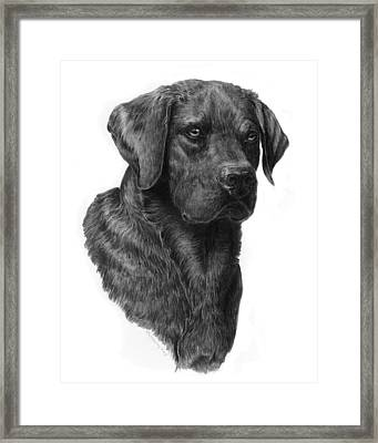 Black Lab Head Study 2 Framed Print by Laurie McGinley