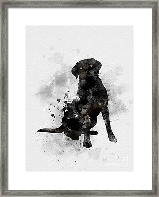 Black Labrador Framed Print by Rebecca Jenkins
