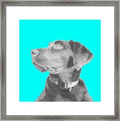 Black Labrador Retriever In Blue Headshot Framed Print by David Smith