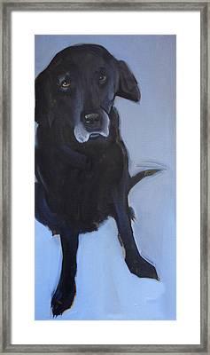 Black Labrador Framed Print by Sally Muir