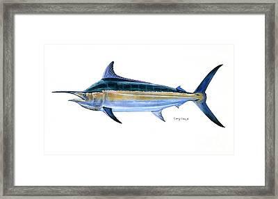 Black Marlin  Framed Print by Carey Chen