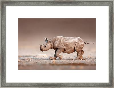 Black Rhinoceros Baby Running Framed Print by Johan Swanepoel