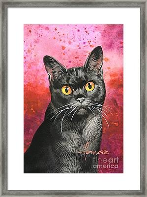 Black Shorthair Framed Print by John Francis