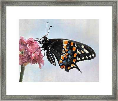 Black Swallowtail Butterfly II Framed Print by David and Carol Kelly