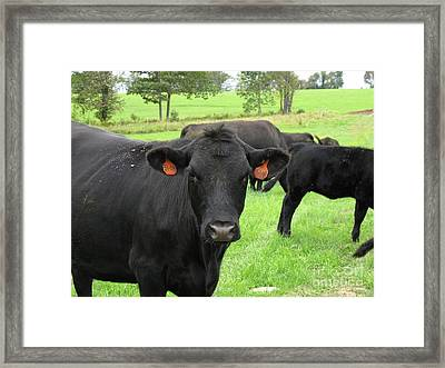 Blackie With Orange Earrings Framed Print by B Rossitto