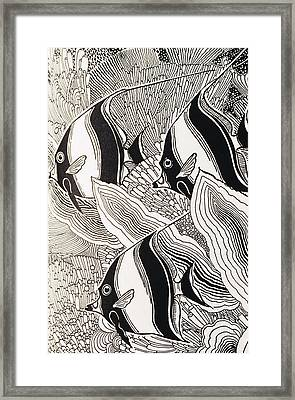 Blandings Angelfish Framed Print by Hawaiian Legacy Archive - Printscapes