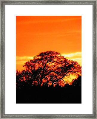 Blazing Oak Tree Framed Print by Karen Wiles