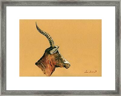 Blesbok Framed Print by Juan  Bosco