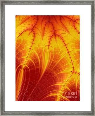 Blood Orange Framed Print by John Edwards