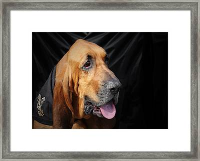 Bloodhound - Governed By A World Of Scents Framed Print by Christine Till