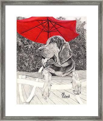 Bloodhound Under Umbrella Framed Print by Tracy Roland