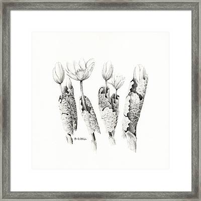 Bloodroot Group Framed Print by Betsy Gray