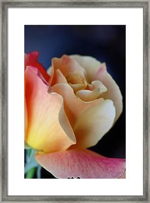 Bloom Framed Print by KC Moffatt