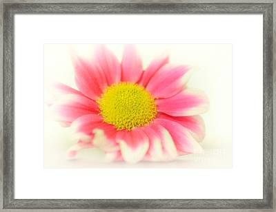 Bloom Ooo Framed Print by SK Pfphotography