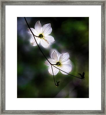 Blooming Dogwoods In Yosemite 2 Framed Print by Larry Marshall