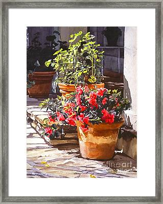 Blossom Niche Framed Print by David Lloyd Glover
