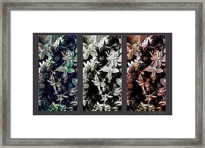 Blossom Panel Framed Print by Jo-Anne Gazo-McKim