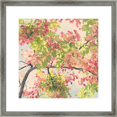 Blossoming Pink Shower Tree - Hipster Photo Square Framed Print by Charmian Vistaunet