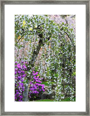 Blossoms Galore Framed Print by Carol Groenen