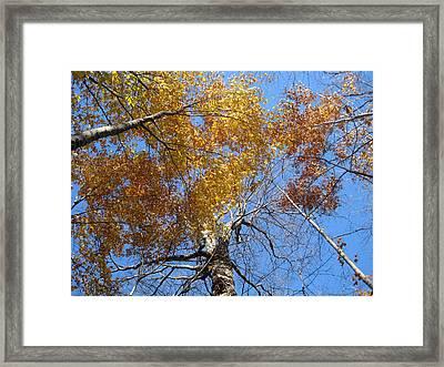Blue And Gold Framed Print by Leon Zernitsky